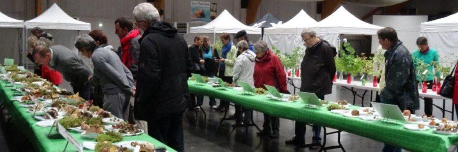 Exposition de plantes et champignons