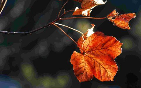 Arbres, arbustes et plantes herbacées en fruits
